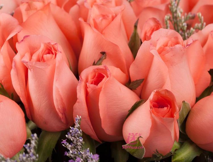 爱的罗曼史—快送鲜花网|送北京鲜花|同城订花|网上花店|异地订花网站