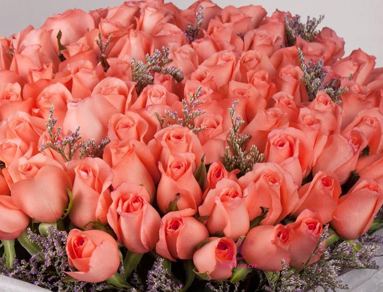 爱的罗曼史—快送鲜花网 送北京鲜花 同城订花 网上花店 异地订花网站