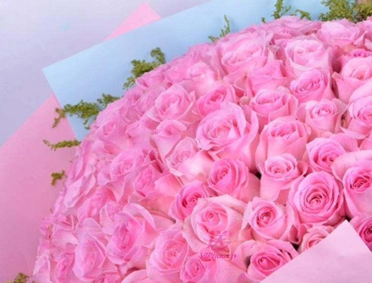粉美人—快送鲜花网|石家庄速递鲜花|同城情人节订花|礼品鲜花|邮政速递