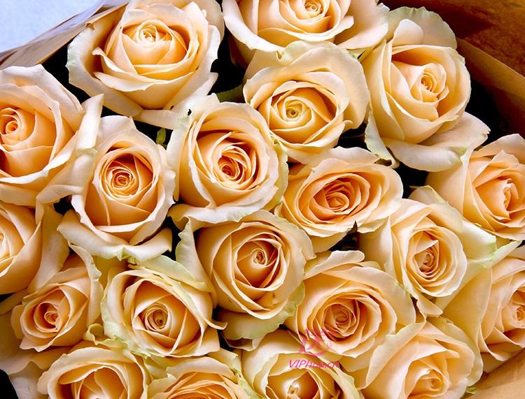 清心依然—快送鲜花网|情人节鲜花预定|朋友节日鲜花|生日鲜花|网上订鲜花