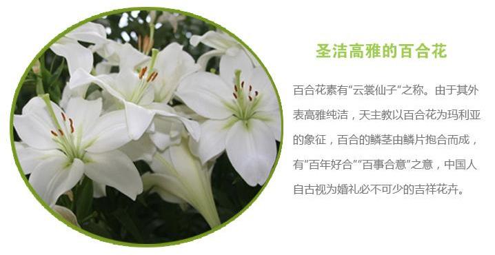 快送鲜花网(www.viphua.com)百合花