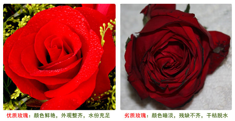 鲜花快递(www.viphua.com)玫瑰花对比