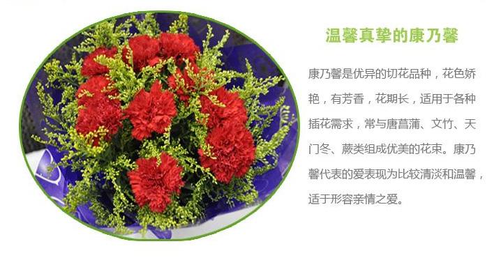 快送鲜花网(www.viphua.com)康乃馨