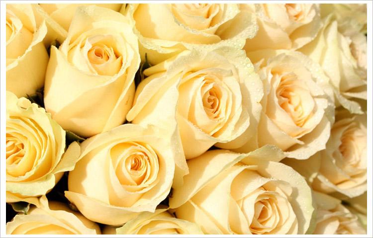 倩影—婚礼鲜花—快送鲜花网|北京网购鲜花|鲜花网购|网购鲜花|北京鲜花|上海鲜花|北京开业花篮订购